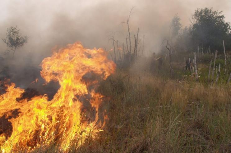 На Харківщині горять луки: Протягом оста…