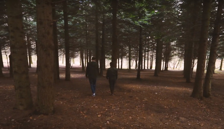 Американський ліс: На Закарпатті можна п…