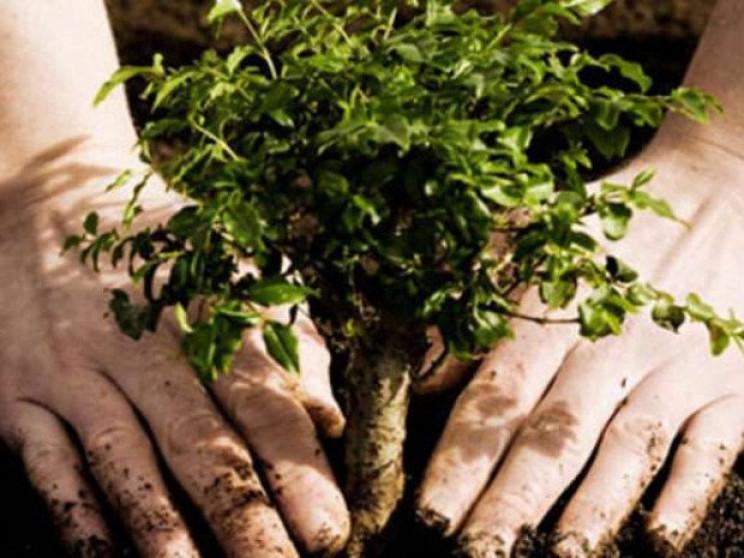 Масштабна акція з висадження дерев в рам…