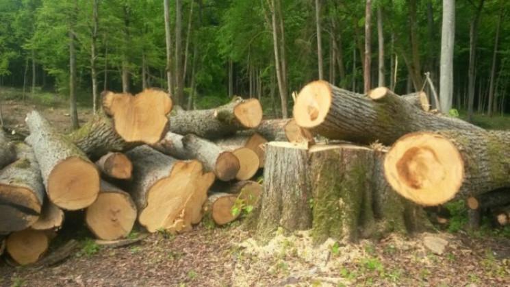ДБР знайшло винних у вирубці лісу на 10,…