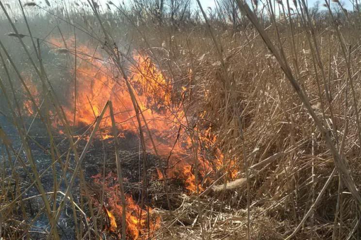 На Харьковщине огонь выжег 25 га террито…