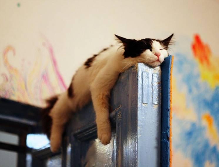 До Всесвітнього дня сну: Коти, яким одна…