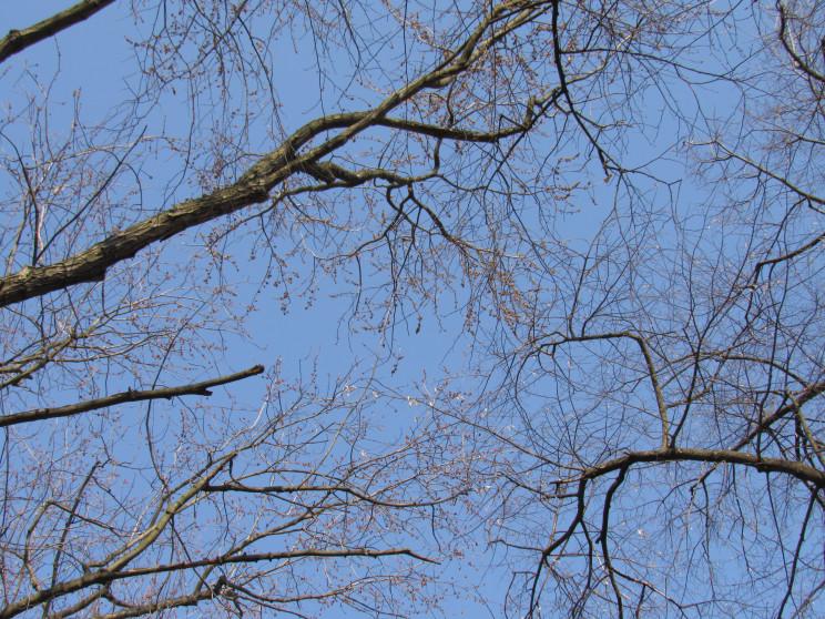 Розгуляється вітрюган: 14 березня на пол…