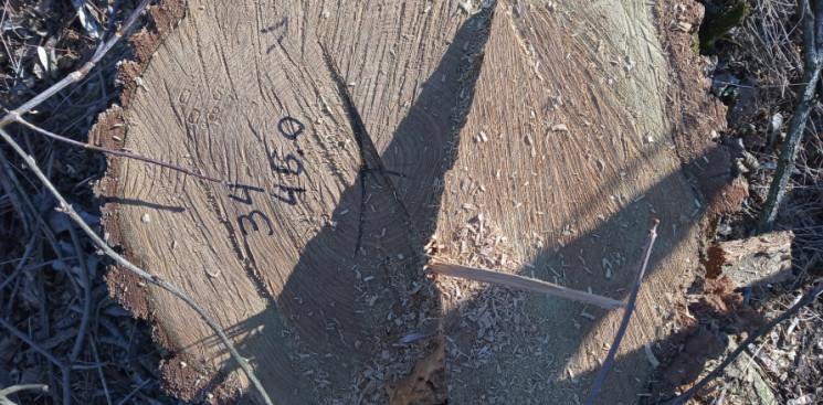 На Миколаївщині лісництво влаштувало сан…