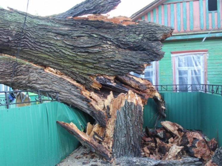 На Львівщині оголосили штормове попередж…