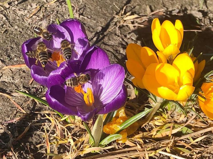 На Хмельниччині 26 березня обіцяють пого…