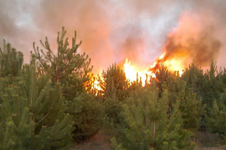 Неподалік Полтави пожежа знищила майже г…