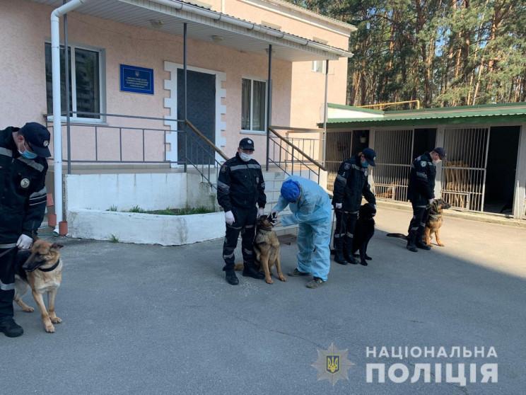 Як на Київщині кінологи зі своїми собака…