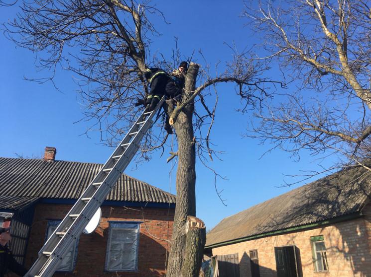 Жителя Полтавщины зажало на дереве во вр…