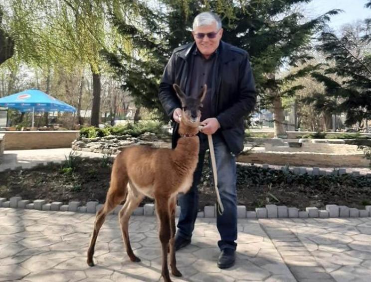 В Одесском зоопарке у пары лам родился д…
