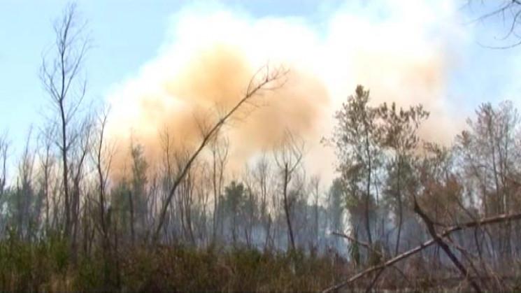 На Кубані розгорілися 42 лісові пожежі…