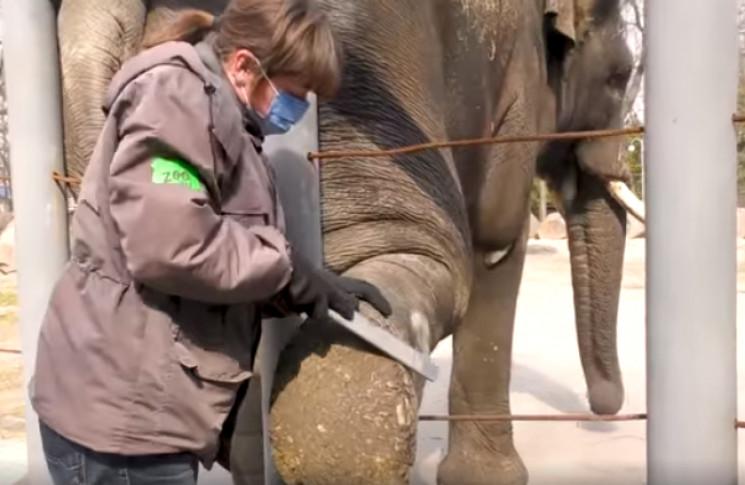 У зоопарку Києва показали, як роблять сл…