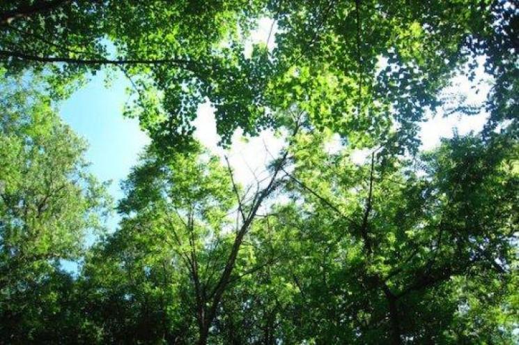 У лісовій галузі України запровадили реж…