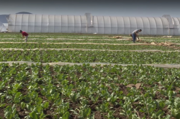 Закарпатським фермерам непереливки: Агра…