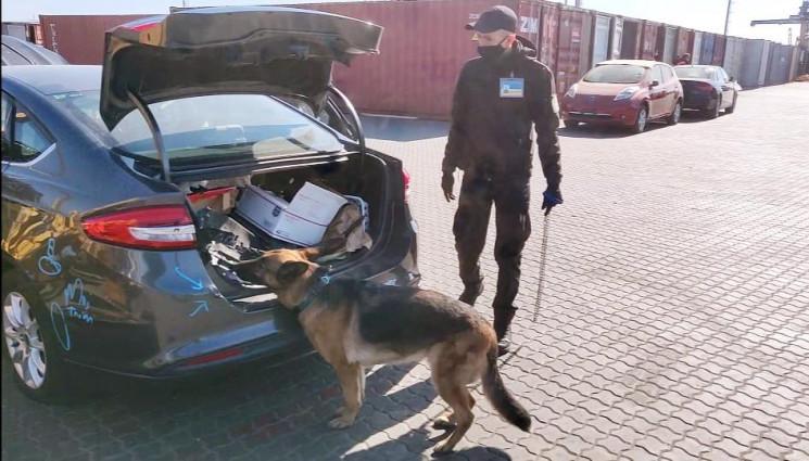 """Автівка з """"травичкою"""": Собака прикордонн…"""