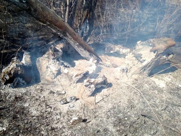 На Київщині бабуся спалила 40 дерев і ге…