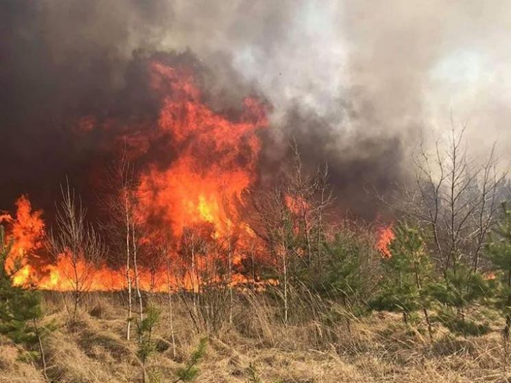 Масштабна пожежа: На Полтавщині горить б…