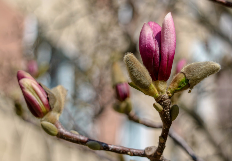 У Вінниці починає господарювати весна…