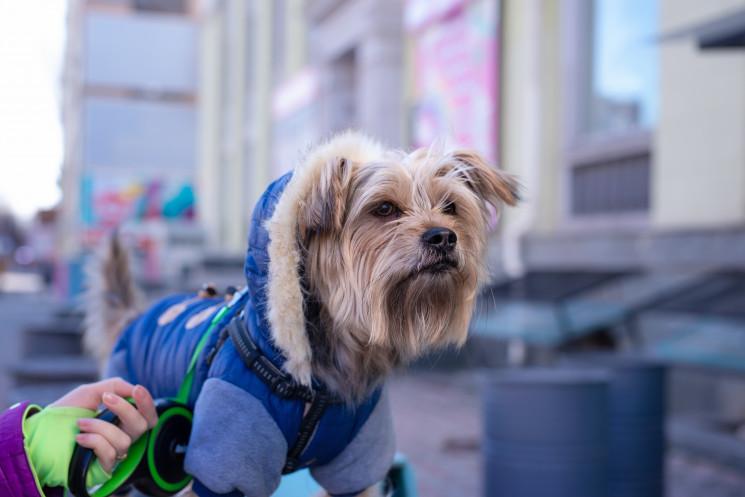 У Бердянську почали здавати собак в орен…