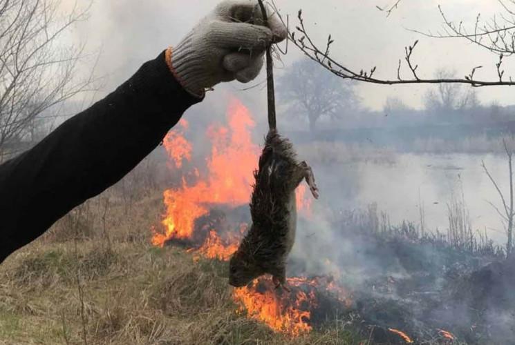 На Дніпропетровщині пожежні врятували з…