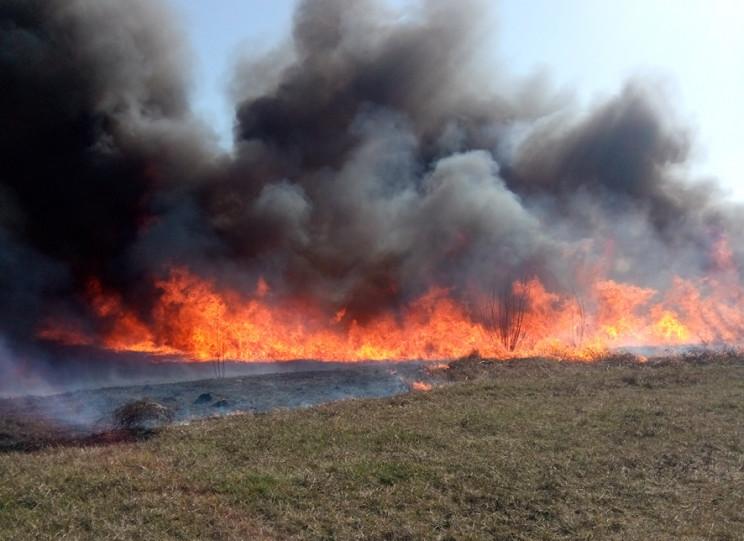 Польових та лісових пожеж 2020-го стало…