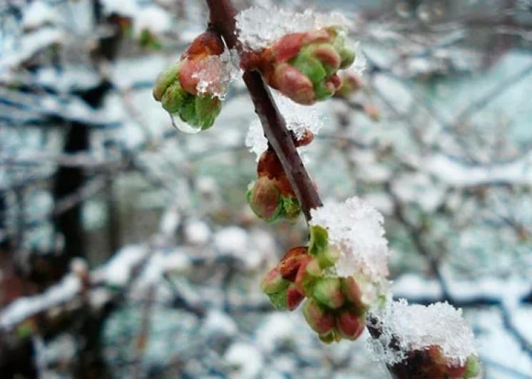 На Прикарпатті прогнозують сильні заморо…