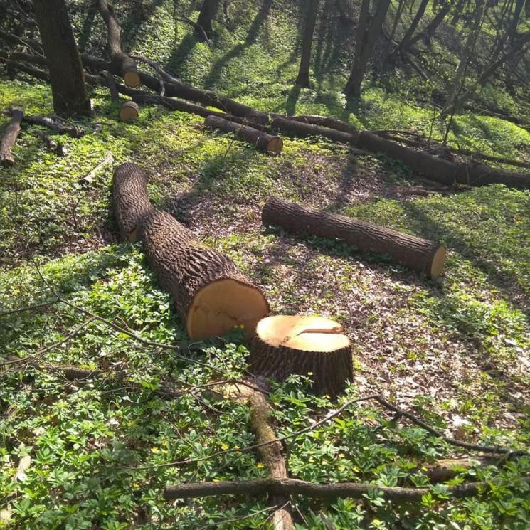 На Дніпропетровщині браконьєри порубали…