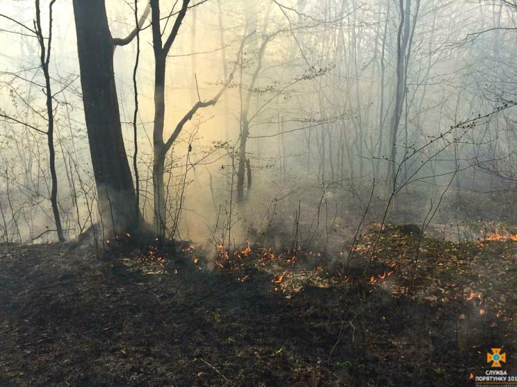 Півсотні гектарів лісу врятували вогнебо…