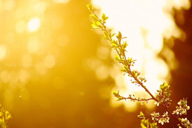 У вівторок Суми заллє сонцем…