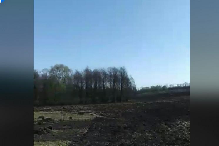 На Сумщині фермер вирубав ліс, аби зроби…