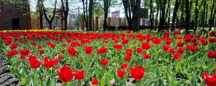 У кропивницькому Дендропарку розквітли 3…