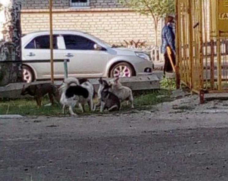 У райцентрі на Запоріжжі зграя собак нап…