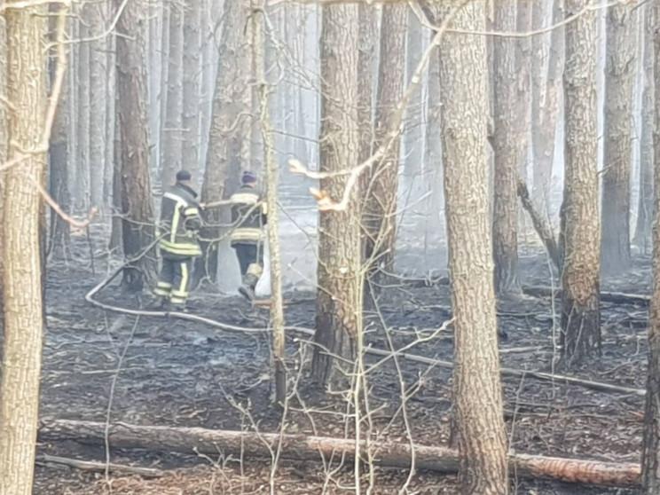 Пожежі в Чорнобилі: Загасили одне лісниц…