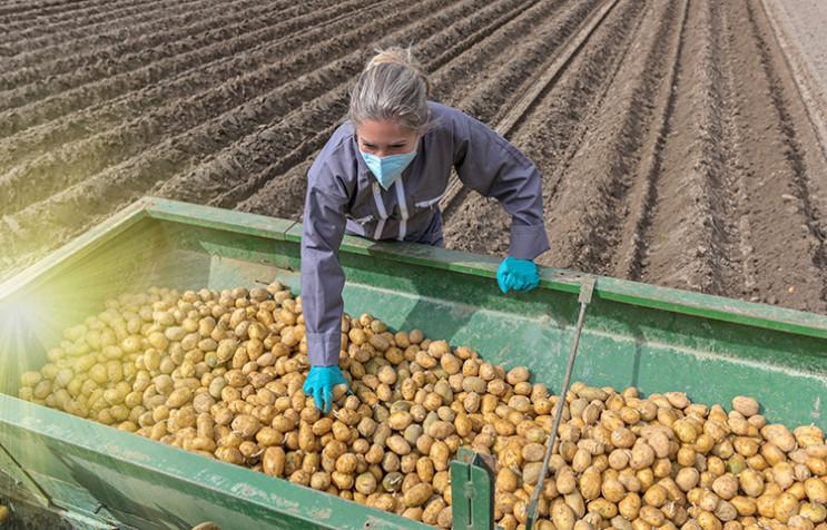 В Європі нема кому збирати врожай: Чому…