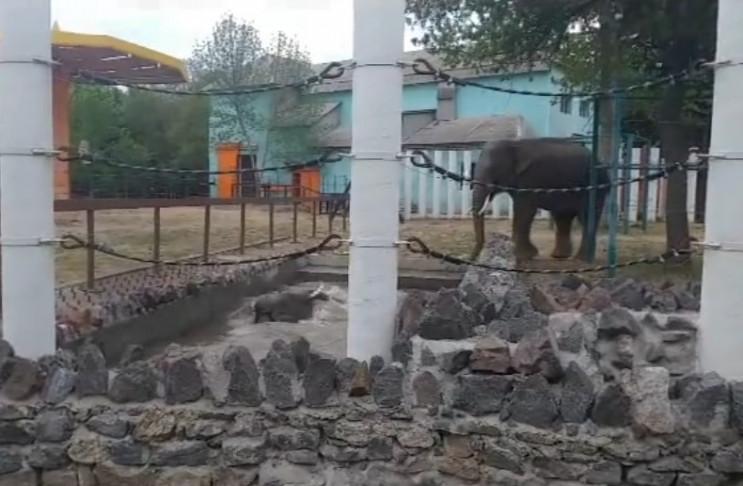 Як слони з Миколаївського зоопарку під ч…