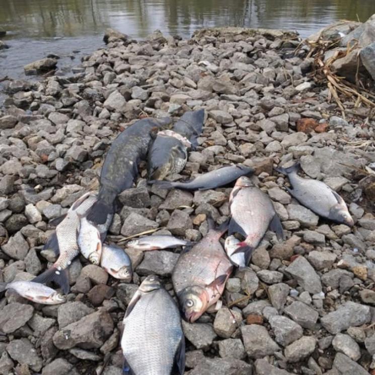 Экологи просят Госводагенство пересмотре…