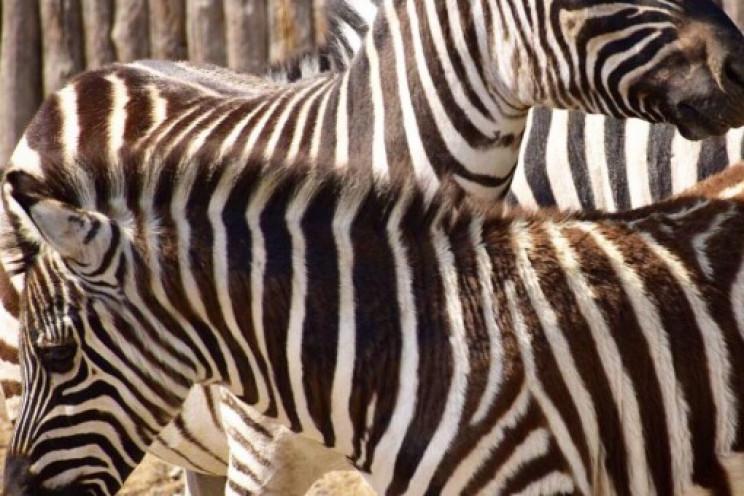 Одеський зоопарк відновлює свою роботу…