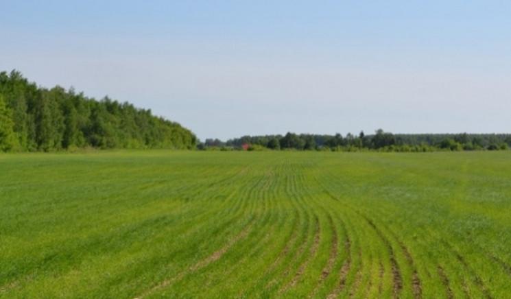 У херсонського фермера відібрали 48 гект…