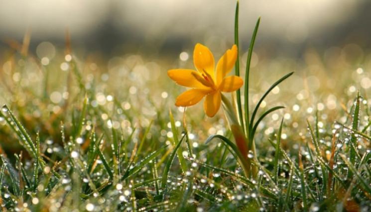 Майже всю середу у Сумах йтиме дощ…