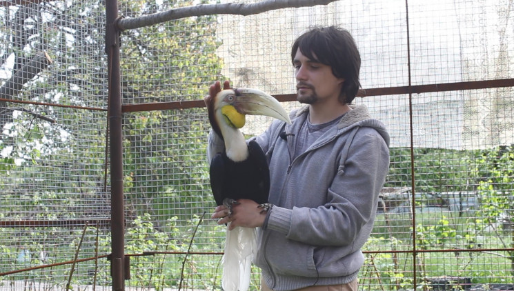 На Кропивнитчине обитает редкая птица-но…