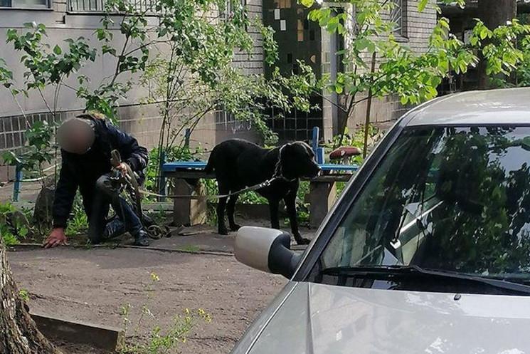 У Дніпрі домашні собаки покусали на вули…
