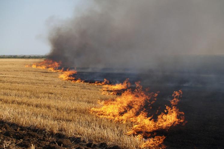 На Львівщині вогонь знищив понад 2 га су…