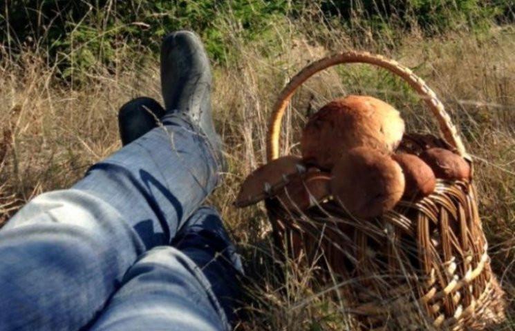 """""""Тихе"""" полювання: Як збирати гриби, щоб…"""