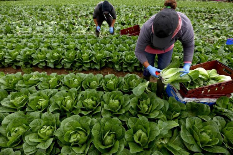 Чеські фермери готові сплатити вартість…