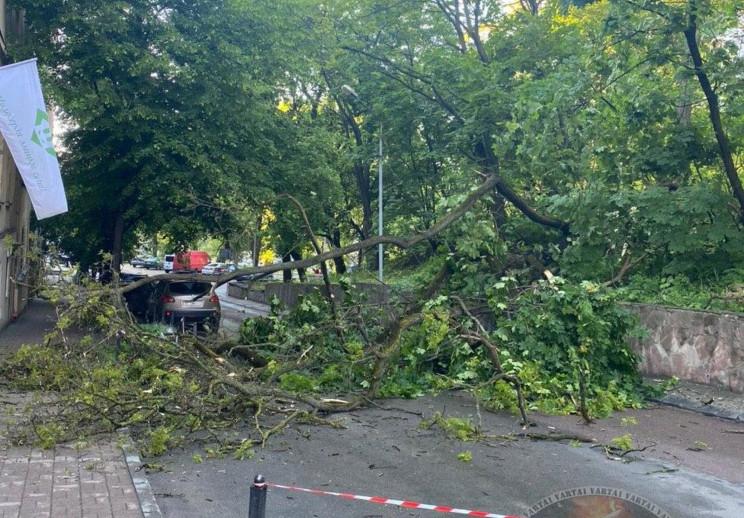 У центрі Львова на дорогу впало дерево (…