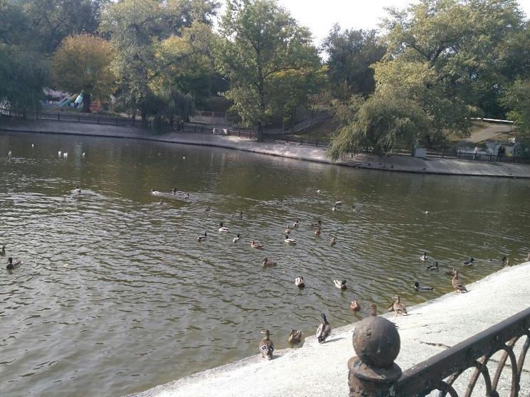 В парке Глобы в центре Днепра из озера в…