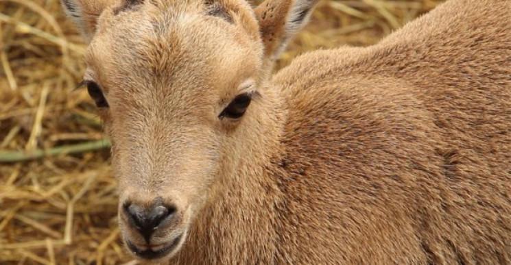 У Харківському зоопарку народилася самка…