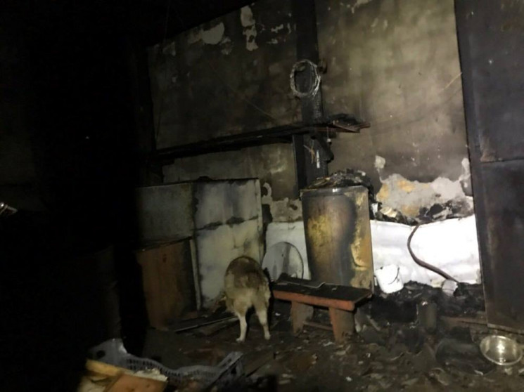 В Одесі спалахнув притулок для тварин…