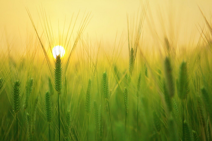 Одеські фермери отримають насіння від по…