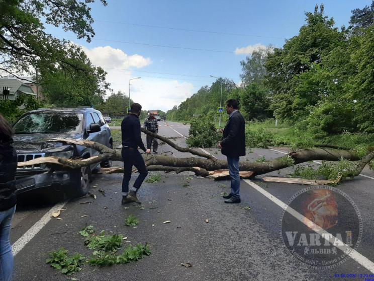 Біля Оброшине на дорогу впало дерево (ФО…